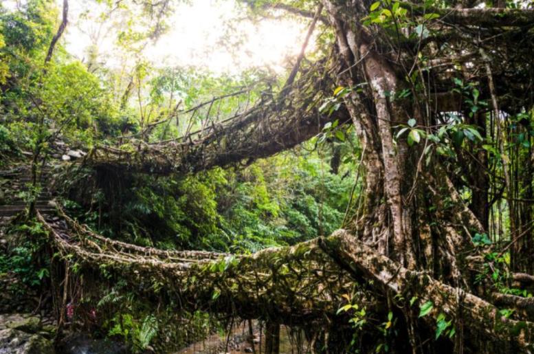 jardin - méditation : pont végétal