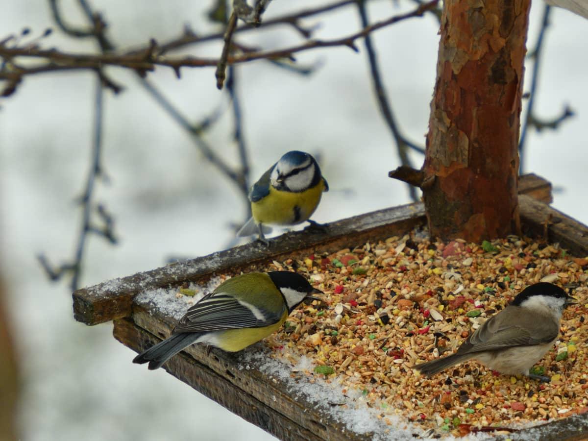 Perchoir à oiseaux