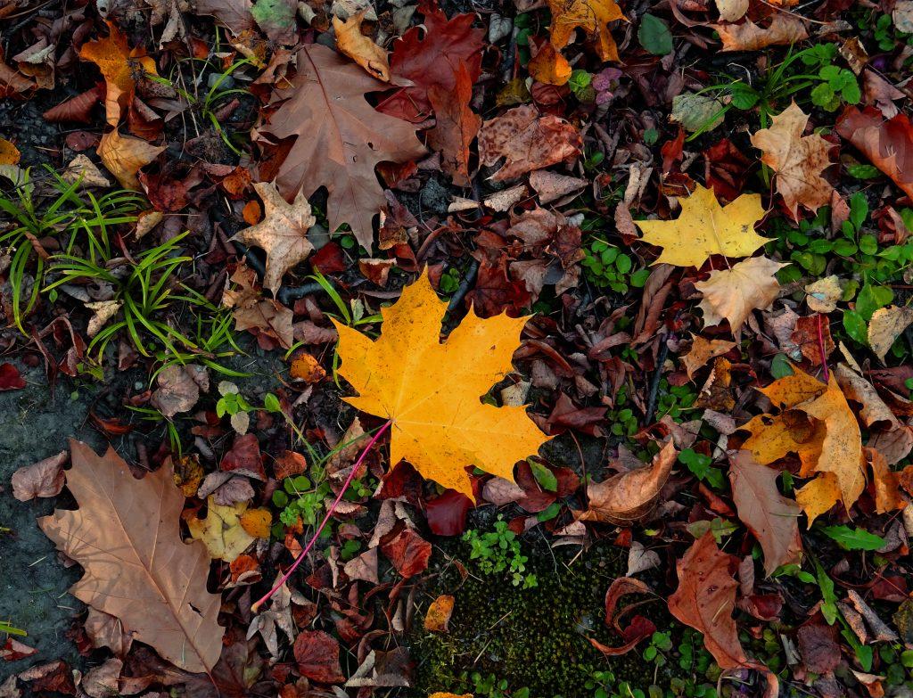 Utiliser les feuilles au jardin