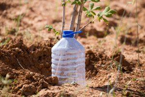 utiliser une bouteille pour arroser le jardin