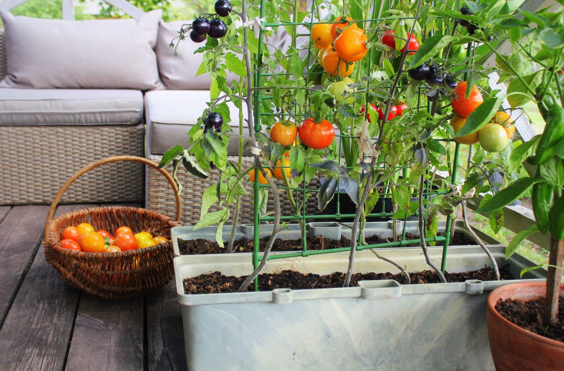 Jardin sur un balcon