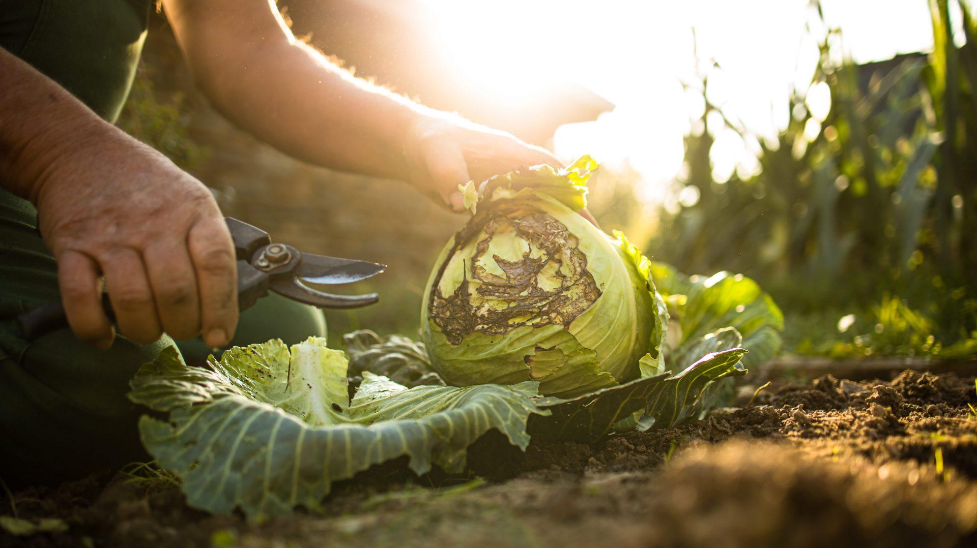La récolte en permaculture