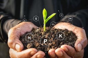 l'azote et le carbone au jardin