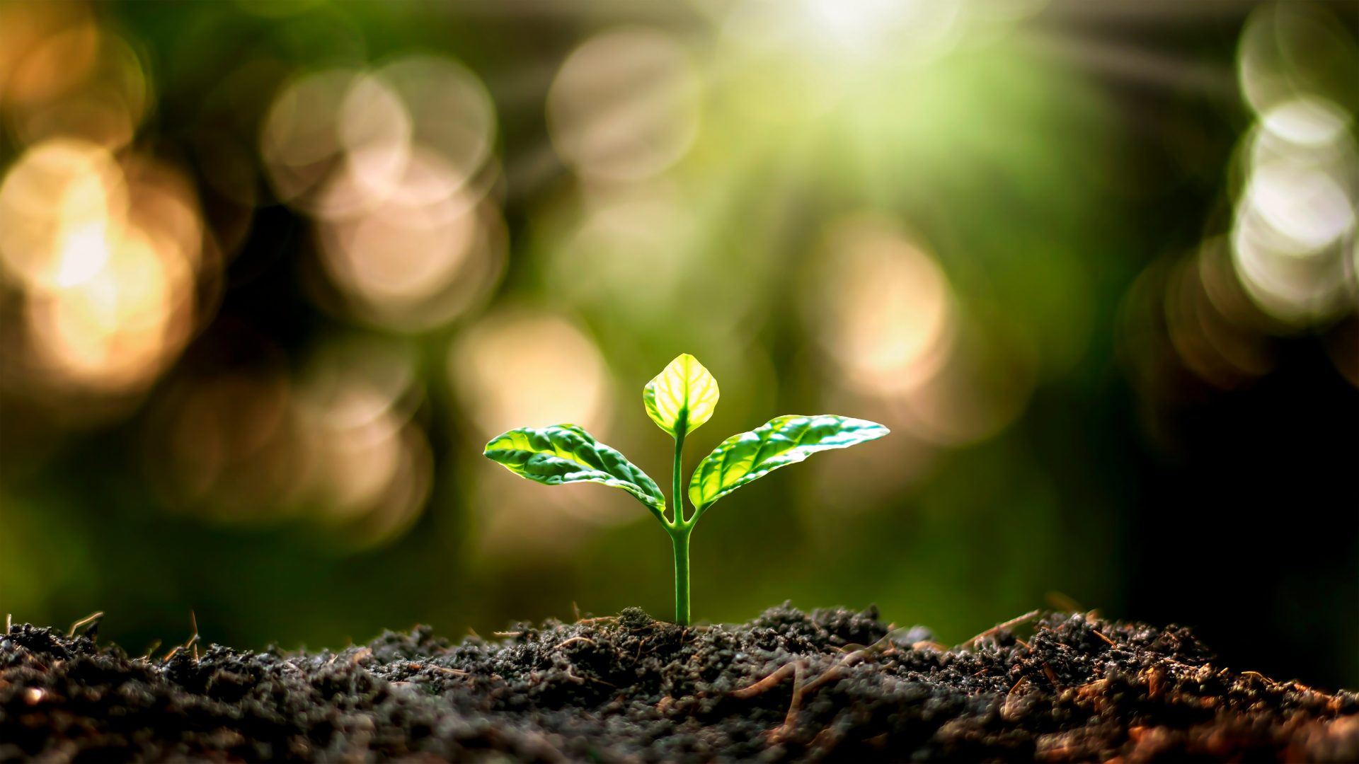 Pousse de plante