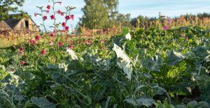 Plantes dans un champ