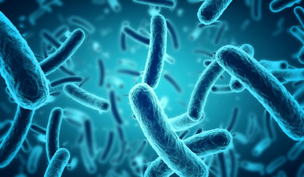 Représentation de microbes en 3d