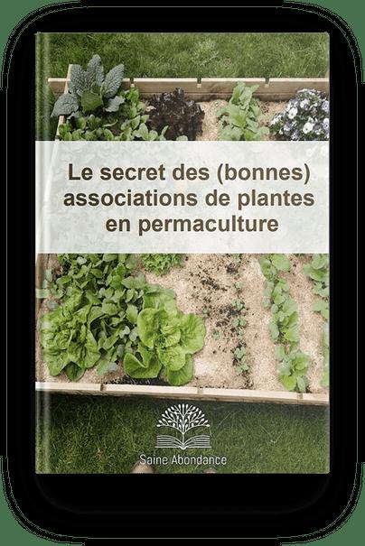 Le secret des bonnes associations de plantes en permaculture